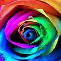 Rainbow Rose by Juergen Weiss
