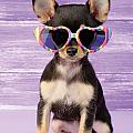 Rainbow Sunglasses by Greg Cuddiford