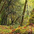 Rainforest Trunk by Adam Jewell