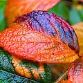 Rainy Day Leaves Print by Rona Black
