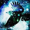 Raven by Anastasiya Malakhova