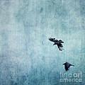 Ravens flight Print by Priska Wettstein