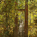 Ravine Gardens State Park In Palatka Fl by Christine Till