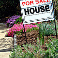 Real Estate For Sale Sign And Garden by Olivier Le Queinec