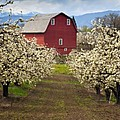 Red Barn Spring by Mike  Dawson