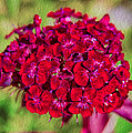 Red Carnations by Omaste Witkowski