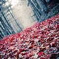 Red Carpet by Edward Fielding