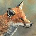 Red Fox Portrait by David Stribbling