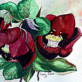 Red Helleborous by Karin  Dawn Kelshall- Best