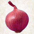 Red Onion  by Danny Smythe