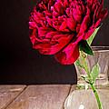 Red Peony Flower Vase Print by Edward Fielding