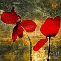 Red Petals by Bernard Jaubert