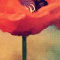 red poppy Print by Rosie Nixon
