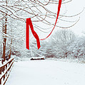 Red Ribbon In Tree Print by Amanda And Christopher Elwell