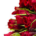 Red Roses by Anne Gilbert