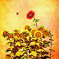 Red Sunflower by Bob Orsillo