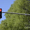 Red traffic light by trees Print by Sami Sarkis