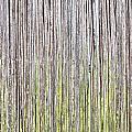 Reeds Background by Tom Gowanlock