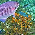 Reef Life by John Malone