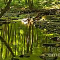 Reflections In Hells Hollow Creek by Adam Jewell