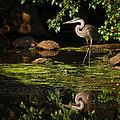 reflective heron Print by Sylvia J Zarco