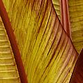 Repose - Leaf by Ben and Raisa Gertsberg