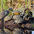 Reptile Refuge by Al Powell Photography USA