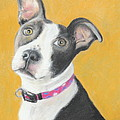 Rescued Pit Bull by Jeanne Fischer