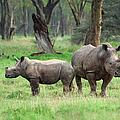 Rhino Family by Sebastian Musial