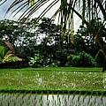 Rice Fields Bali Print by Juergen Weiss