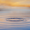 Ripples On A Still Pond by Tim Gainey