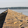 Rockland Breakwater Lighthouse Coast Of Maine by Keith Webber Jr