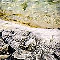 Rocks At Georgian Bay by Elena Elisseeva