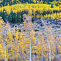 Rocky Mountain Autumn Contrast by James BO  Insogna