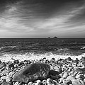 Rocky Shore by Chris Thaxter