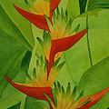 Rojo Sobre Verde by Diane Cutter