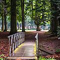Romantic Bridge To Shadow Place. De Haar Castle by Jenny Rainbow