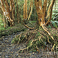 Roots by James Brunker