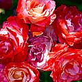 Rose 124 by Pamela Cooper
