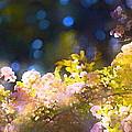 Rose 183 by Pamela Cooper