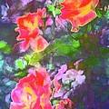 Rose 192 by Pamela Cooper