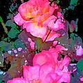 Rose 193 by Pamela Cooper