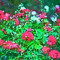 Rose 201 by Pamela Cooper