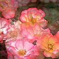 Rose 212 by Pamela Cooper