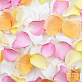 Rose Petals Background by Elena Elisseeva