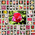 Roses Collage 2 - Painted by Stefano Senise