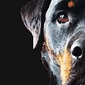 Rottie Love - Rottweiler Art By Sharon Cummings by Sharon Cummings
