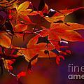 Royal Autumn A by Jennifer Apffel