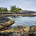 Rugged Coast Of Pacific Ocean On Vancouver Island by Elena Elisseeva