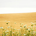 Run With Me Through A Field Of Wild Flowers by Artist and Photographer Laura Wrede